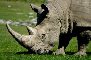 Rhinoc