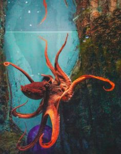 Blog - Octopus