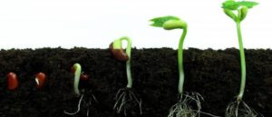 Blog-Fasting-Seed Germination